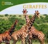 National Geographic Giraffes